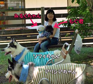 アリシアちゃん&ソフィちゃん&もぐ君&みるくちゃん