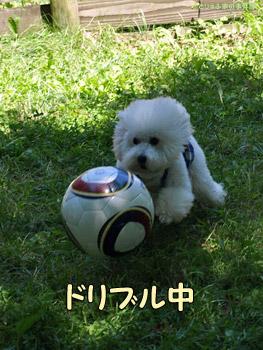 サッカー犬みるくちゃん