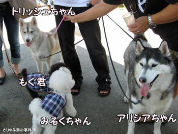 もぐくん&みるくちゃん&アリシアちゃん&トリッシュちゃん