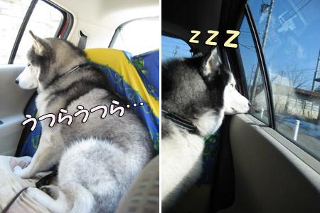 車中でうたた寝