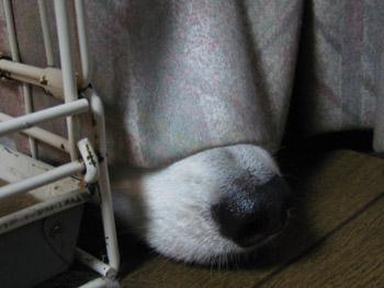 誰のお鼻?