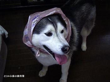 とりゅふ頭巾