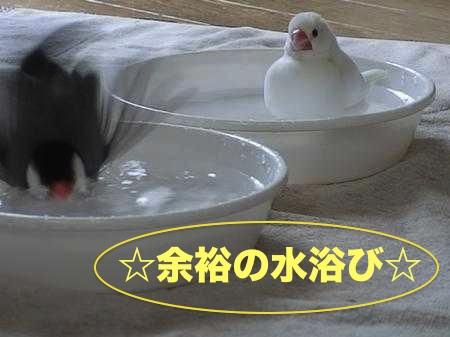 貫禄水浴び