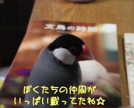 文鳥の時間2
