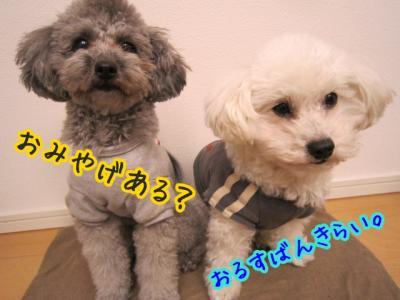 IMG_1593_20110210233845.jpg