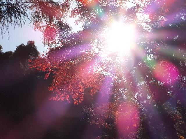 3_20121209180405.jpg
