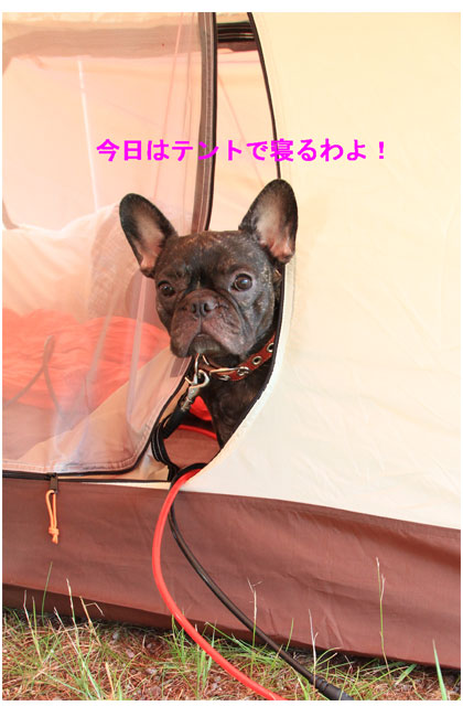 今日はテントで寝るわよ!