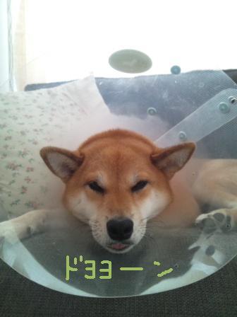 ichi-sp-2.jpg