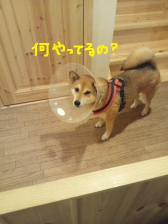 ichi-sp-4.jpg