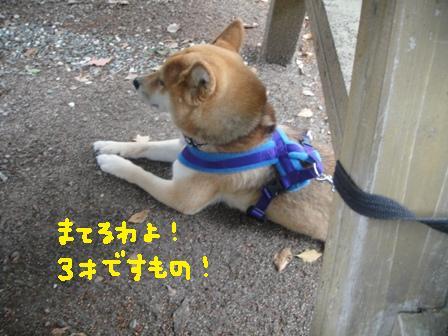 ichi111a.jpg