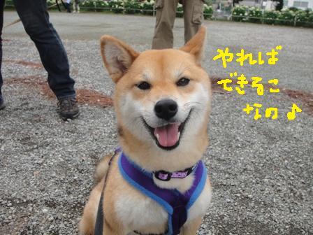 ichi112o.jpg