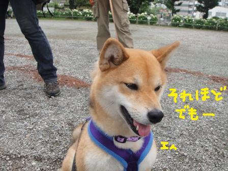 ichi112p.jpg