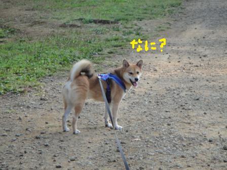 ichi117-b.jpg