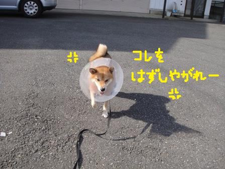 ichi117w.jpg