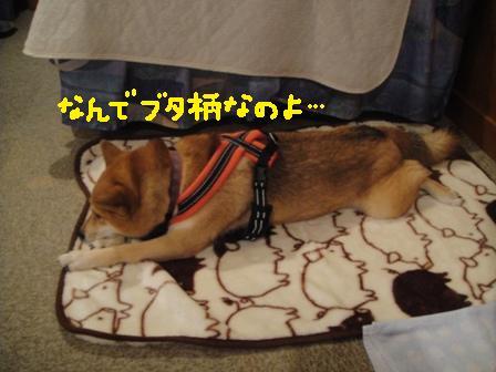 ichi118s.jpg