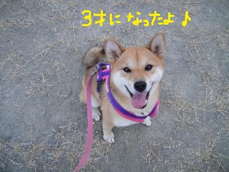 ichi79p.jpg