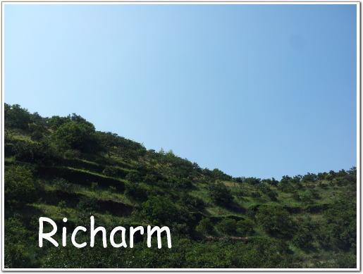 Richarm リチャーム 和泉市 葉菜の森