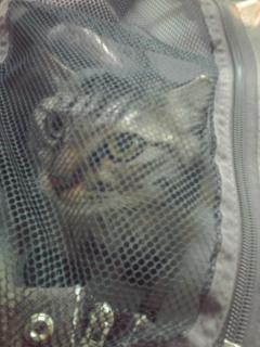 袋の猫にゃ。