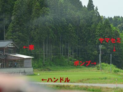 20120524ヤマセミ