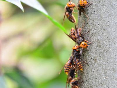 20120920ハチの巣