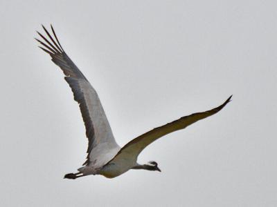 20121018アネハ飛行2