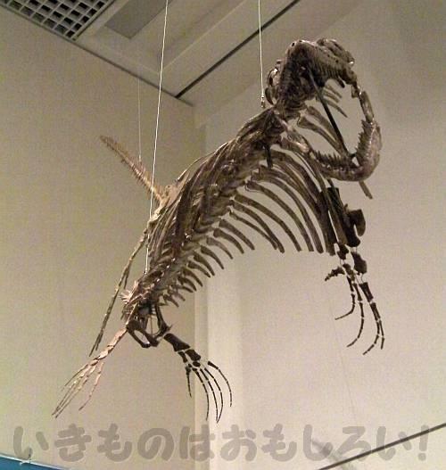 上からこちらを狙っているモササウルス[OCEAN! 海はモンスターでいっぱい]