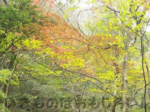 様々に色づく木々[神戸市立森林植物園 東門付近]