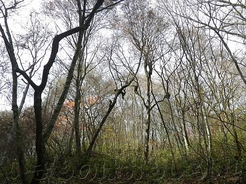 すっかり葉を落とした木ばかりのモミジ谷