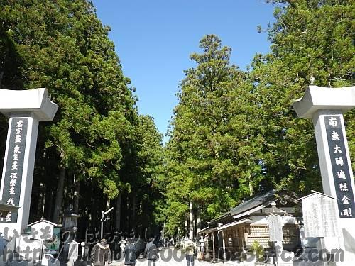 杉の巨木がならず奥の院参道 中ノ橋の駐車場前から