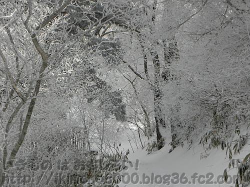 雪と樹氷に覆われた金剛山のちはや園地