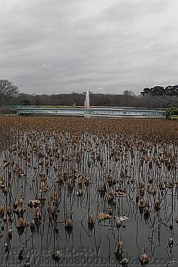 長居植物園の大池