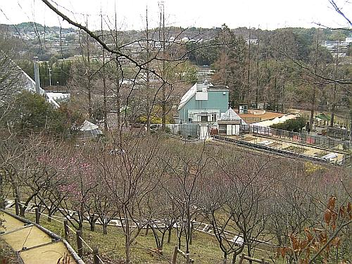 遊歩道から見た花の文化園の梅園