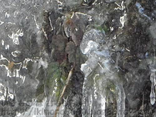 氷に閉じ込められたシソ科っぽい植物