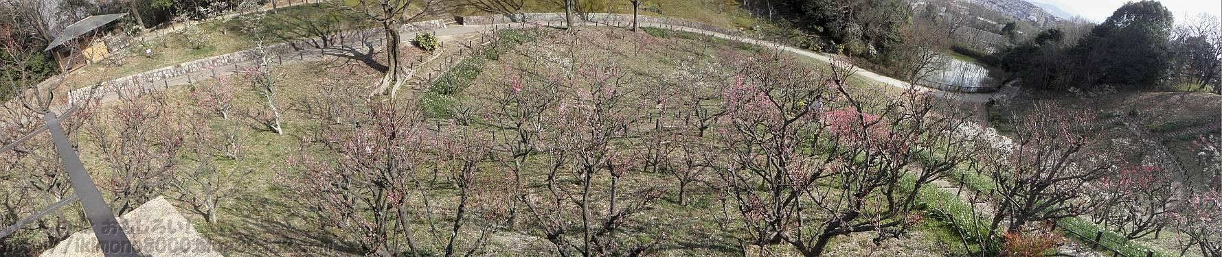 休憩所から見た錦織公園の梅園
