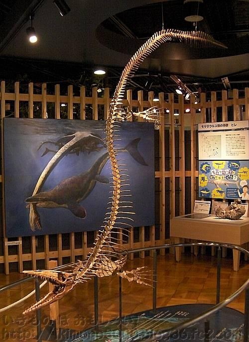 きしわだ自然資料館2階で常設展示されているモササウルス