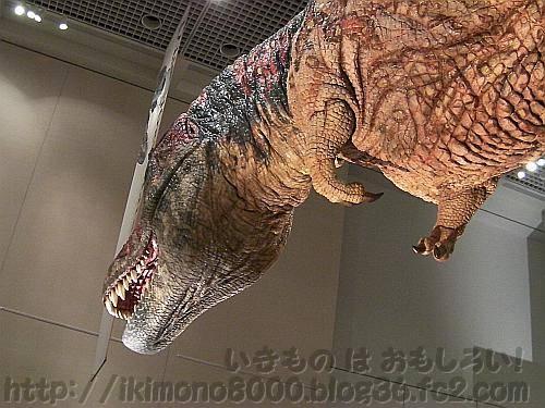 前肢が短め復元のアニマトロニクスのティラノサウルス「新説・恐竜の成長」[大阪市立自然史博物館]