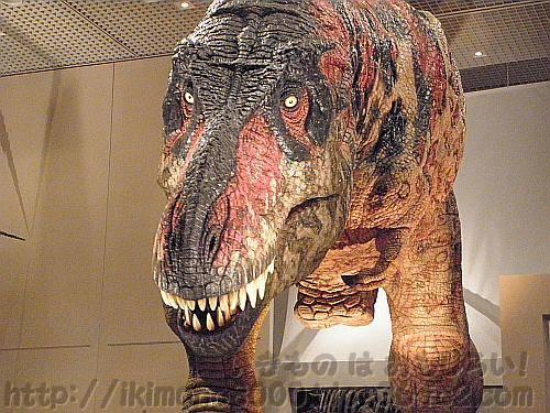 「お前ら会いにこいよ!」と言っている?ティラノサウルス「新説・恐竜の成長」[大阪市立自然史博物館]