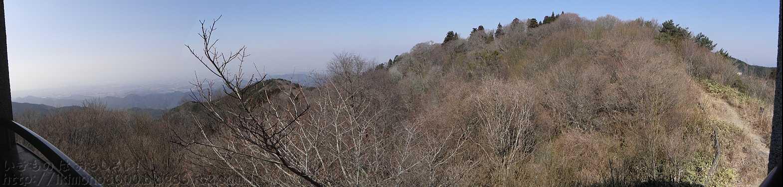 展望台から見た和泉葛城山のブナ林