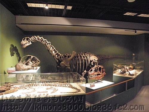 ジュラ紀後期コーナーのカマラサウルスの子供