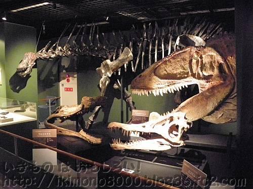 白亜紀前期コーナーのアマルガサウルスとカルカロドントサウルス