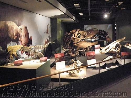 白亜紀後期コーナーの寝そべるタルボサウルス