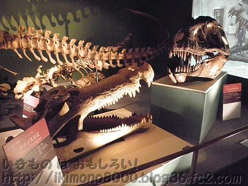 白亜紀後期コーナーの睨み合うディノスクスとティラノサウルス