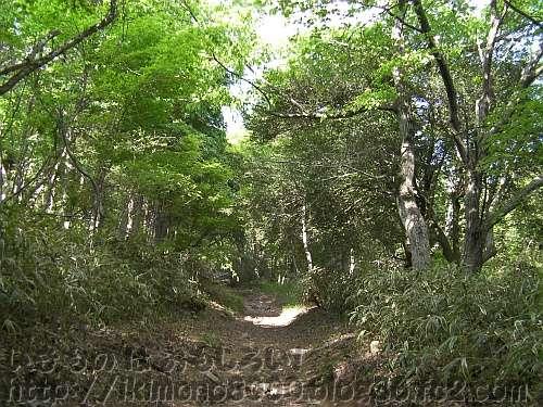 森の中を歩いて行く徳川道