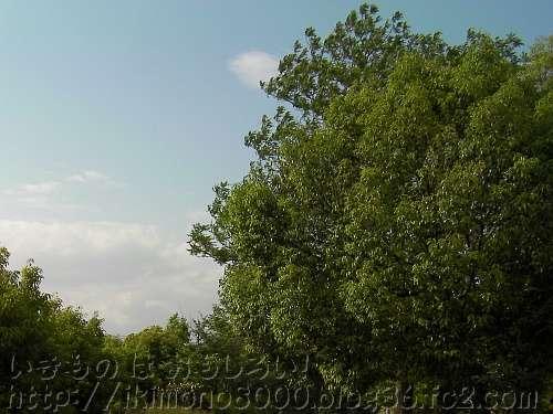 金環日食でもいつもと変わらない公園の木々