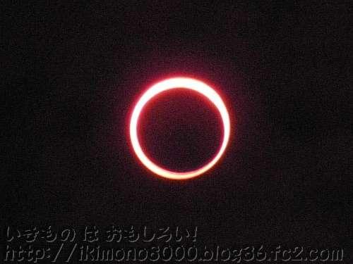 金環日食の最中