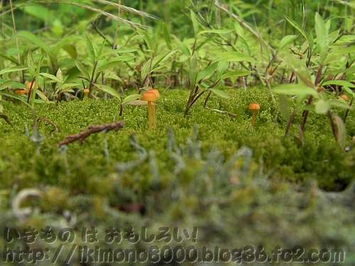 梅雨の錦織公園の小さな森