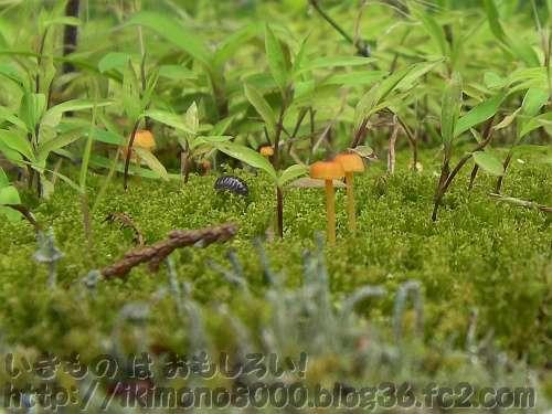 小さな森にダンゴムシがやってきた