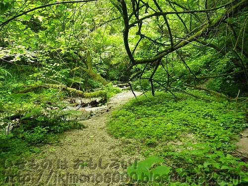 緑に覆われたモミジ谷