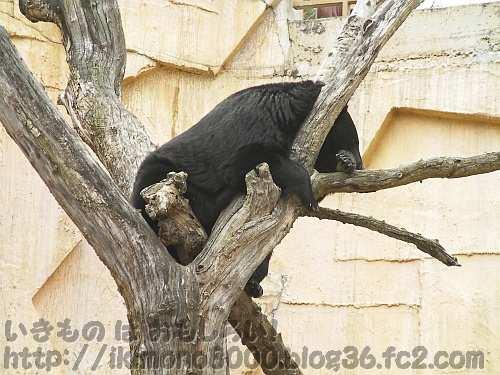 木にだって登れる機動力の高さ(みさき公園)