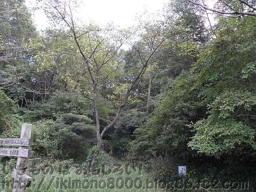 河内の里のマント群落・ソデ群落(西側入り口)